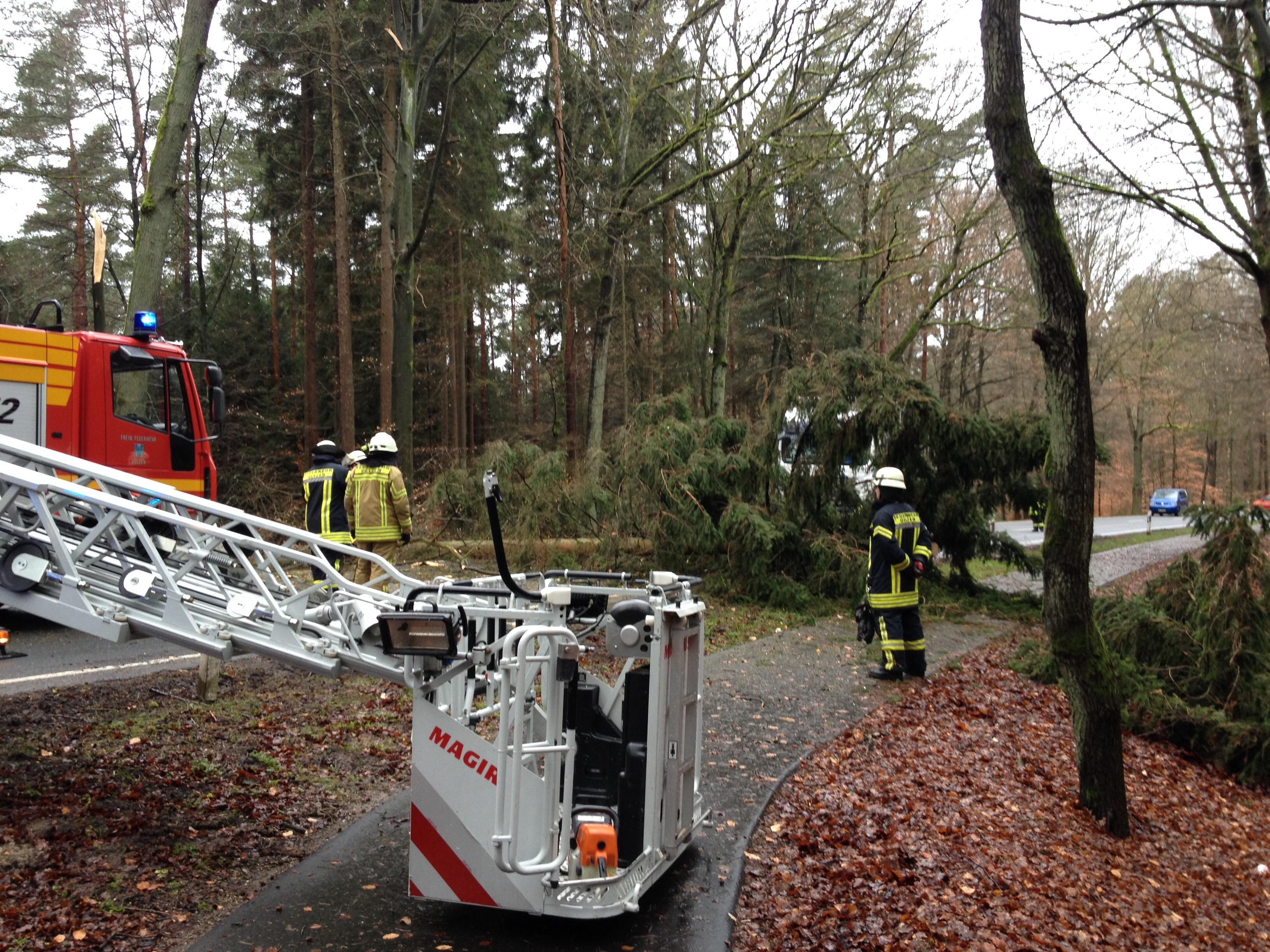 011. Sturmschaden - Baum auf Straße
