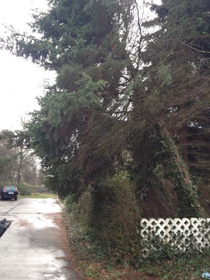 021. Baum droht auf Haus zu fallen