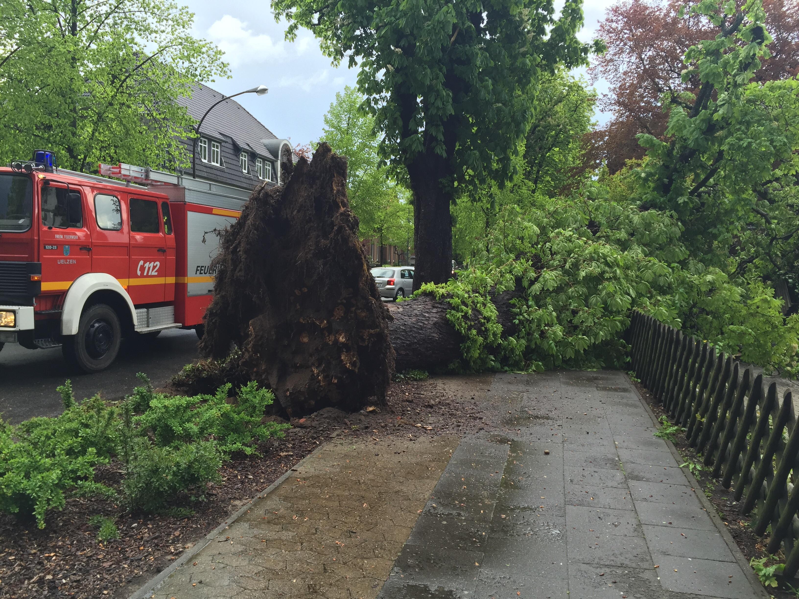 103. Sturmschaden - Baum auf Carport