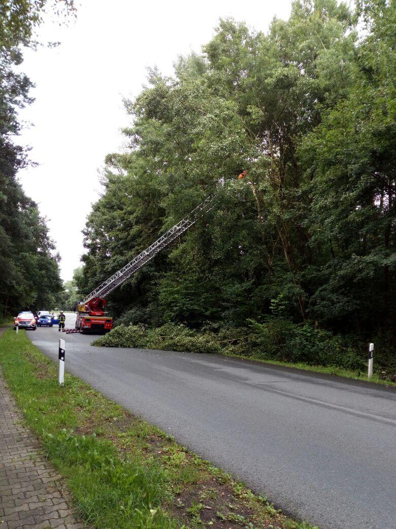 206. Hilfeleistung -- Mehrere Bäume drohen auf Straße zu fallen
