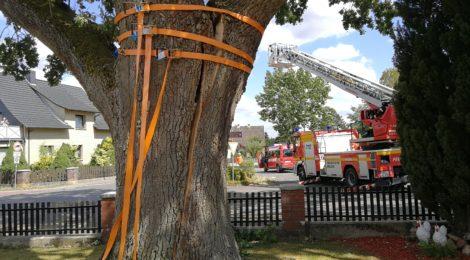204. Hilfeleistung - - Anforderung DLK - Baum droht auf Straße zu fallen